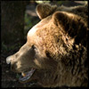 L'Ours Maleck